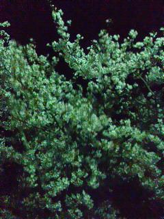 20120417嵐山夜桜ジョギング!