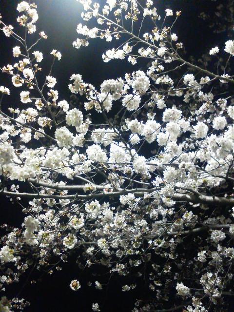 20140401嵐山桜ジョギング