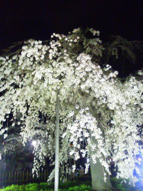 20140403嵐山桜ジョギング